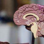 Nicotinamide Riboside as My Favorite Brain Supplement